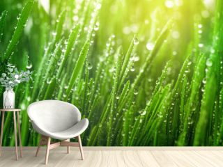 Fresh green grass with dew drops in morning sunny lights. Beautiful nature landscape with water droplets.