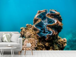 Giant clam resting among colorful coral reef