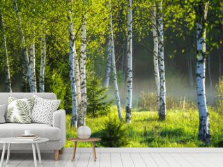 Spring in the birch grove
