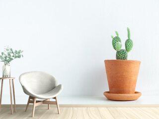 Green cactus in terracotta pot.
