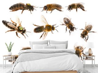 bee queen mother and drone and bee worker - three types of bee (apis mellifera)