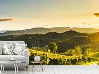 Sunset panorama of wine street on Slovenia, Austria border in Styria. Fields of grapevines.