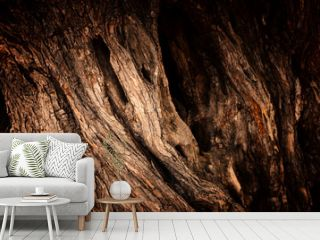 Close up of tree trunk texture