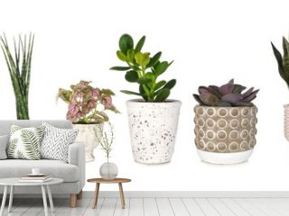 Group of various unique houseplants in pots isolated on a white background