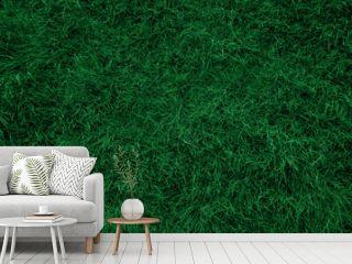 Dark green grass texture and background