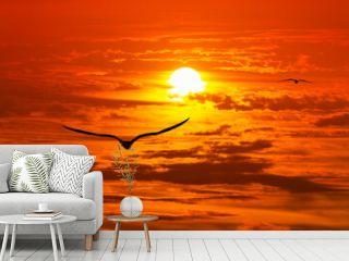 Beautiful Sunset Bird Inspirational Nature Silhouette