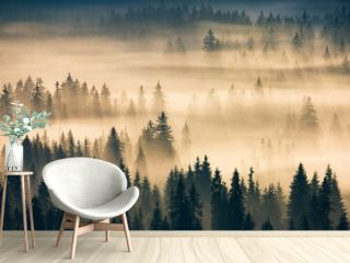misty valley scenery at sunrise. beautiful nature background with coniferous trees in fog. mountain landscape of romania in autumn season