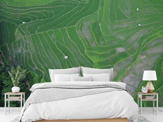 aerial panorama of agrarian rice fields landscape in the village of Semarang, Central Java, like a terraced rice fields ubud Bali Indonesia