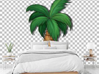Palm tree on transparent background
