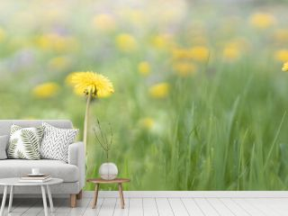 Spring green field with yellow dandelions on a sunny day. Long horizontal banner. Romantic landscape panorama, copy space.