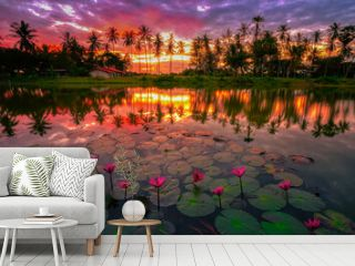 A sun rise reflected in lake behind country house surrounded by pinky beautiful lotus