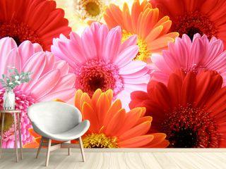 colorful gerbera petals