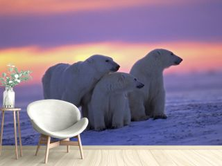 Polar bear with her cubs in Canadian Arctic sunset