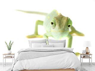 Chameleon. Isolation on white.