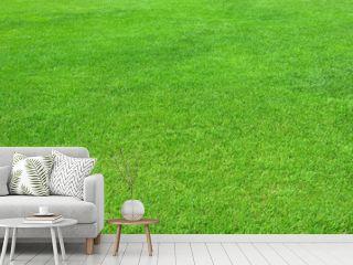 Pure empty green grass field cut horizontal