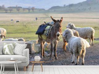 single donkey among herd of sheep