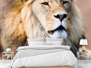 leo the lion king