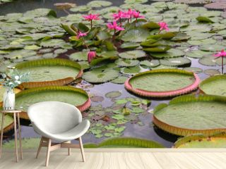 water lilies in a lake