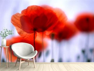 Roter Mohn, Klatschmohn, Blume des Jahres 2017, Copyspace