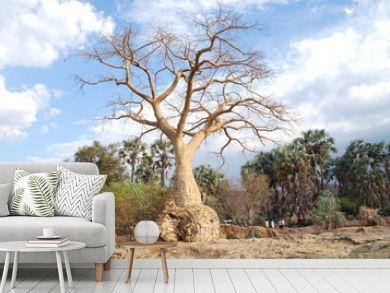 Namibia - L'albero baobab