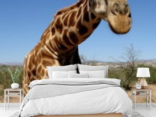 Giraffe in Desert