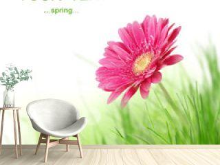 Spring gerbera flower