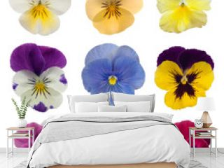collection of pansies