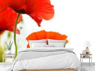 art poppies white background, green floral design