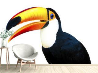 Beautiful Toucan