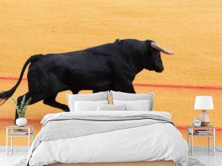 Taureau, corrida