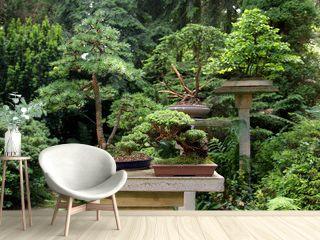 Bonsai - Garten