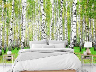 September autumn birch grove