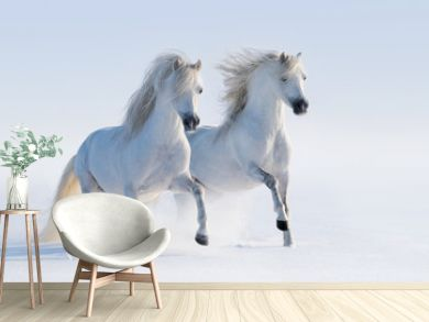 Two galloping snow-white horses