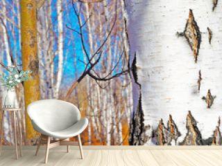 Birch in the autumn forest