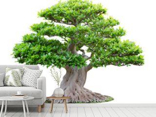 Big bonsai tree isolated on white background