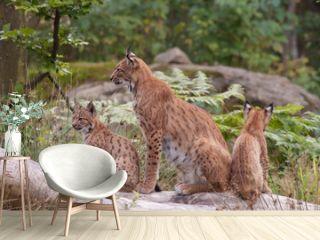 Eurasian lynx (Lynx lynx) with cubs