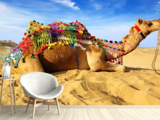 Camel laying on sand, Bikaner, India