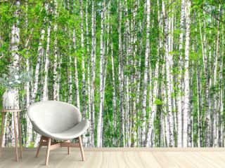 Birch forest. May