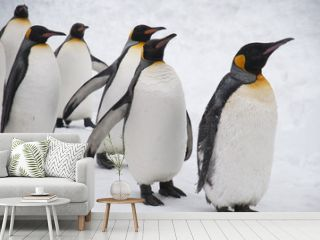 旭山動物園のペンギン