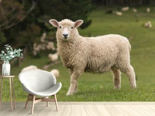 isolated lamb with grazing sheep in background
