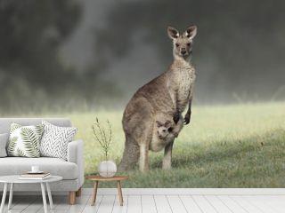 Eastern Grey Kangaroo with joey