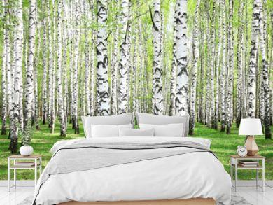 First spring greens in birch grove