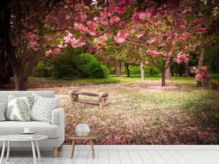 Tranquil garden bench surrounded by cherry blossom trees
