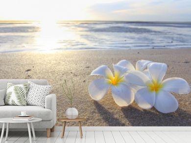 the beautiful flowers on beach background.JPG