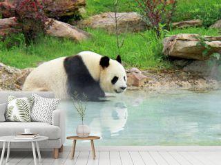 Bain de vapeur d'un panda géant