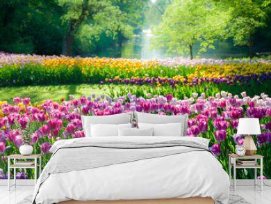Tulip flowers field