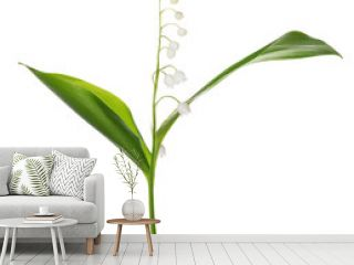 lily of the valley single flower isolated on white