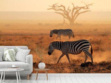 Plains zebras in dust, Amboseli National Park