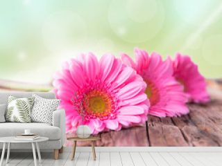 Pink gerbera daisies on wood,