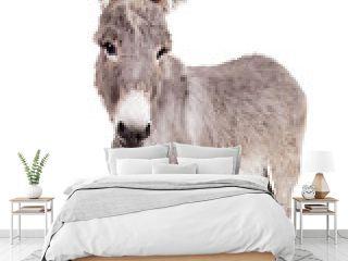 Pretty Donkey isolated on the white background